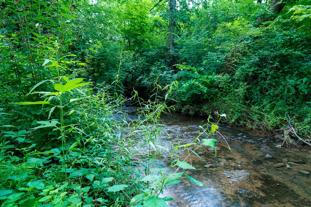 Creek In Back Yard
