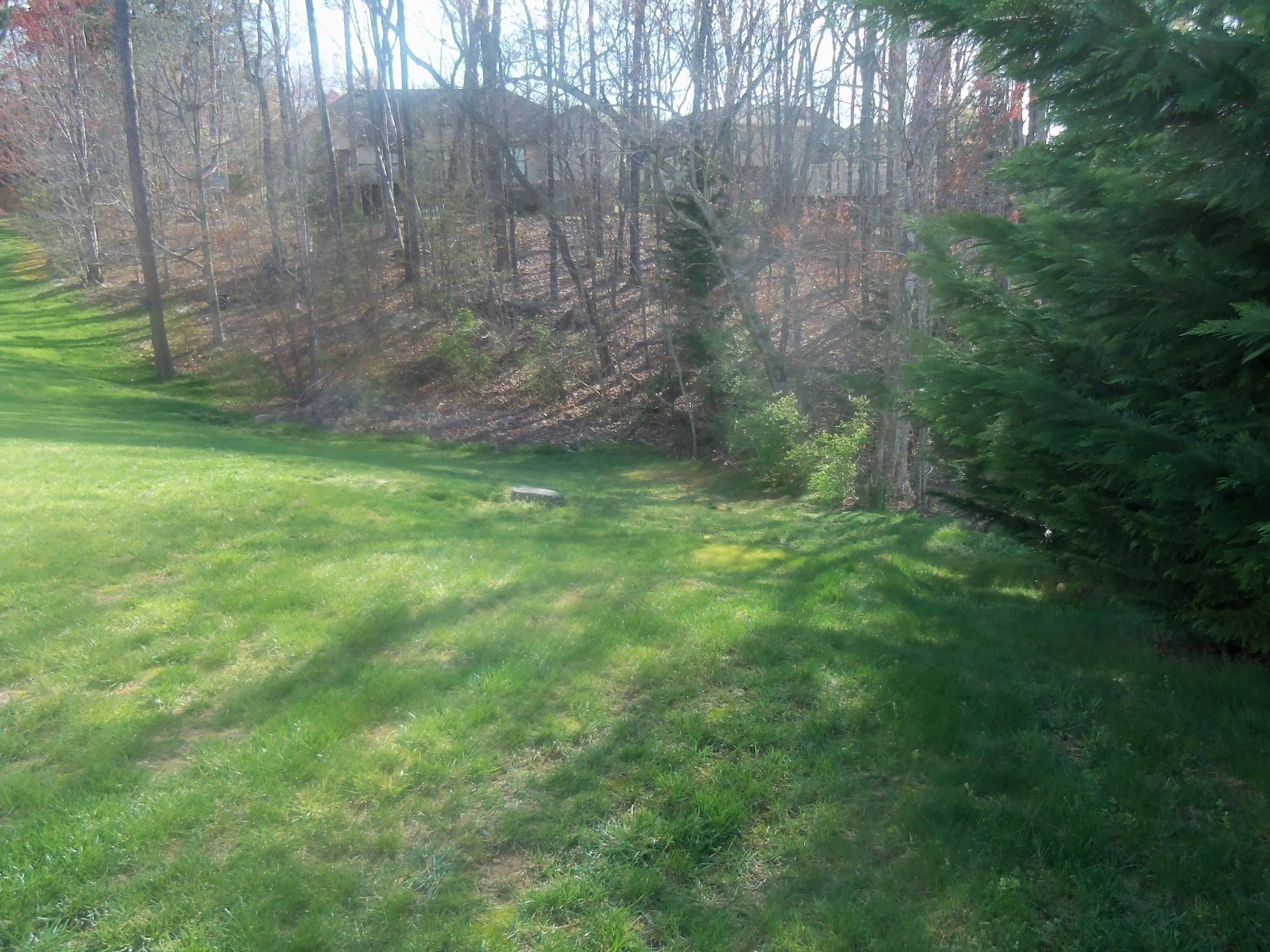 Wooded Back Helps w/Privacy