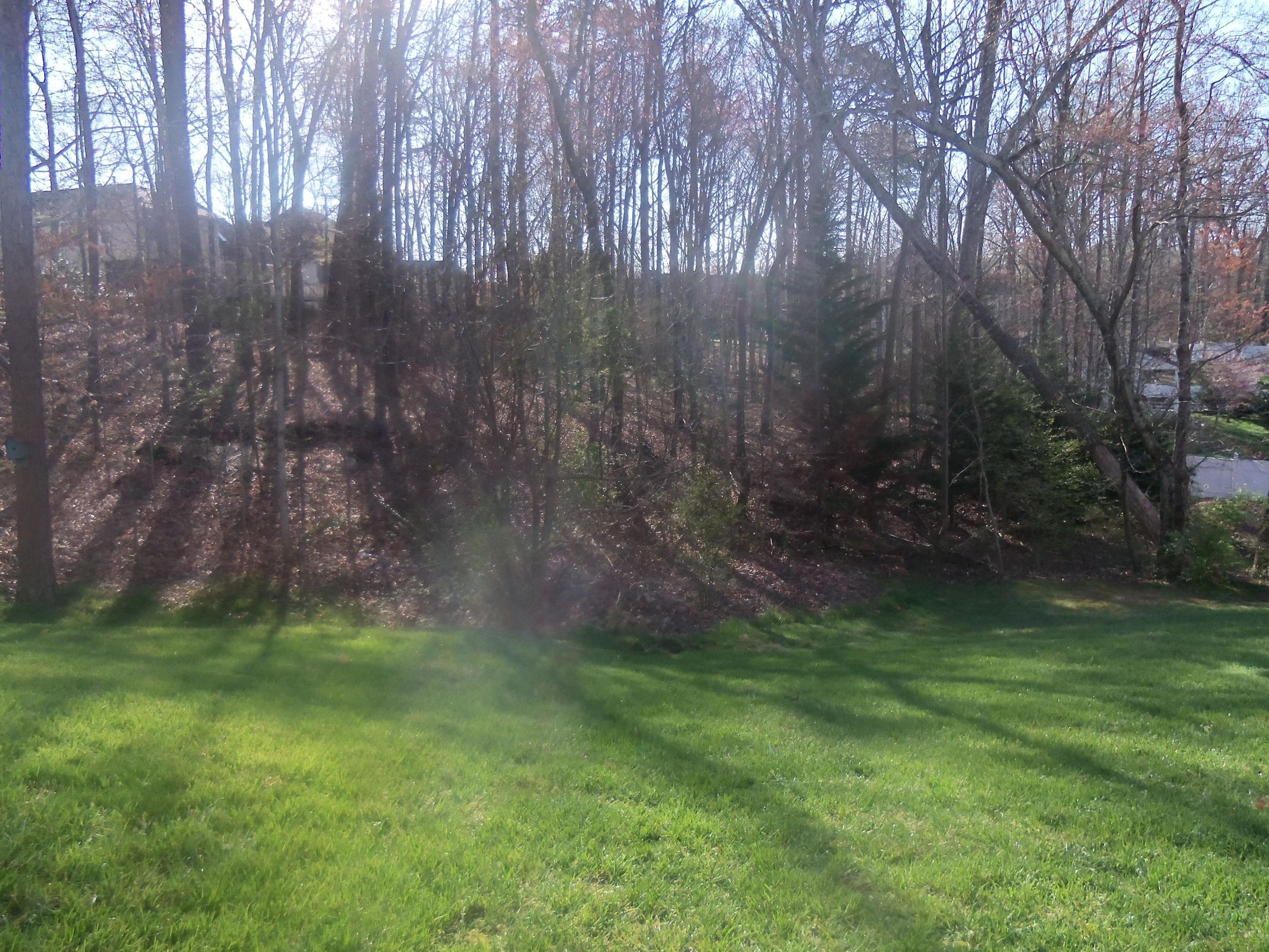 Wooded Back Helps with Privacy