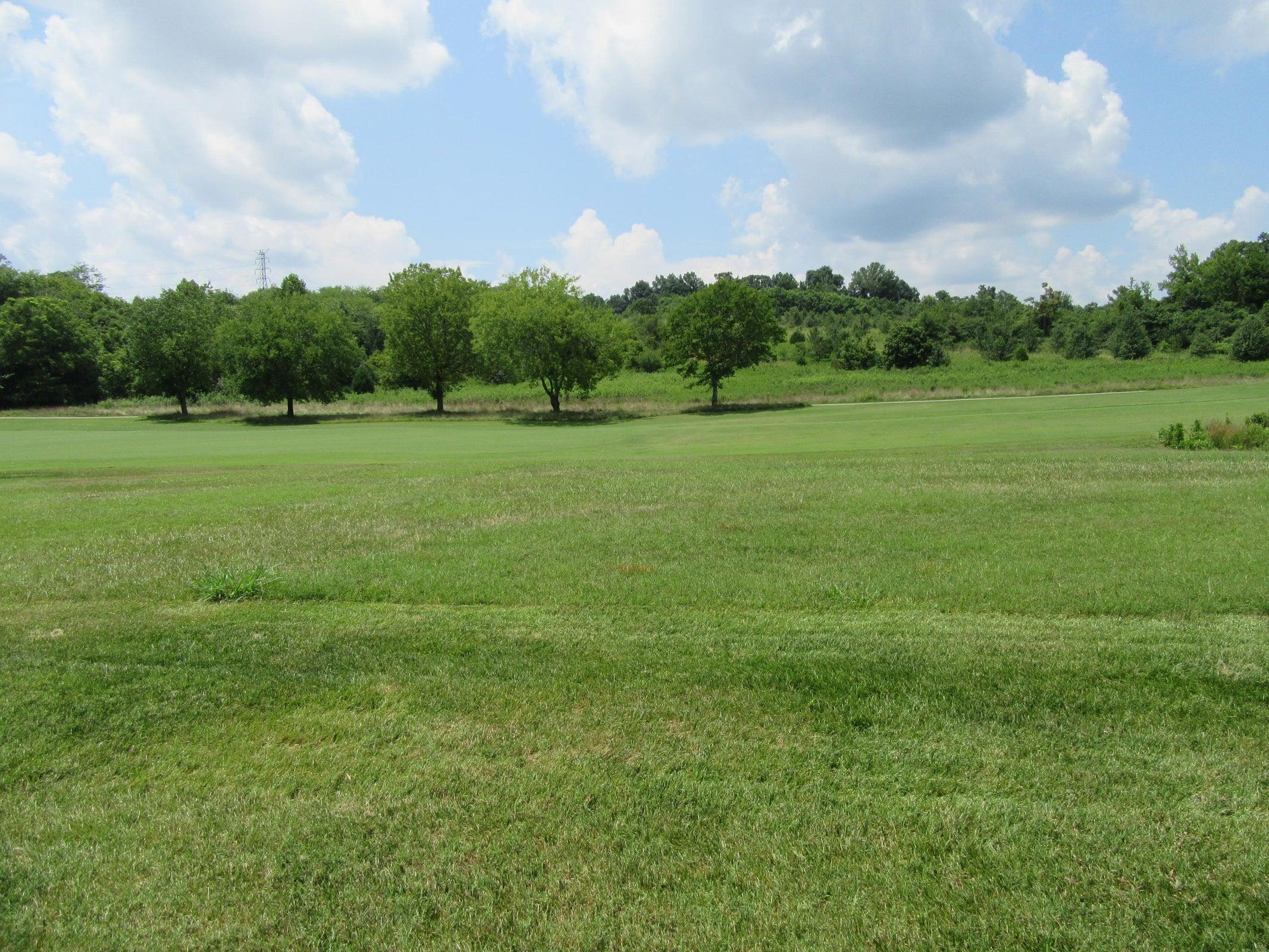 View back yard