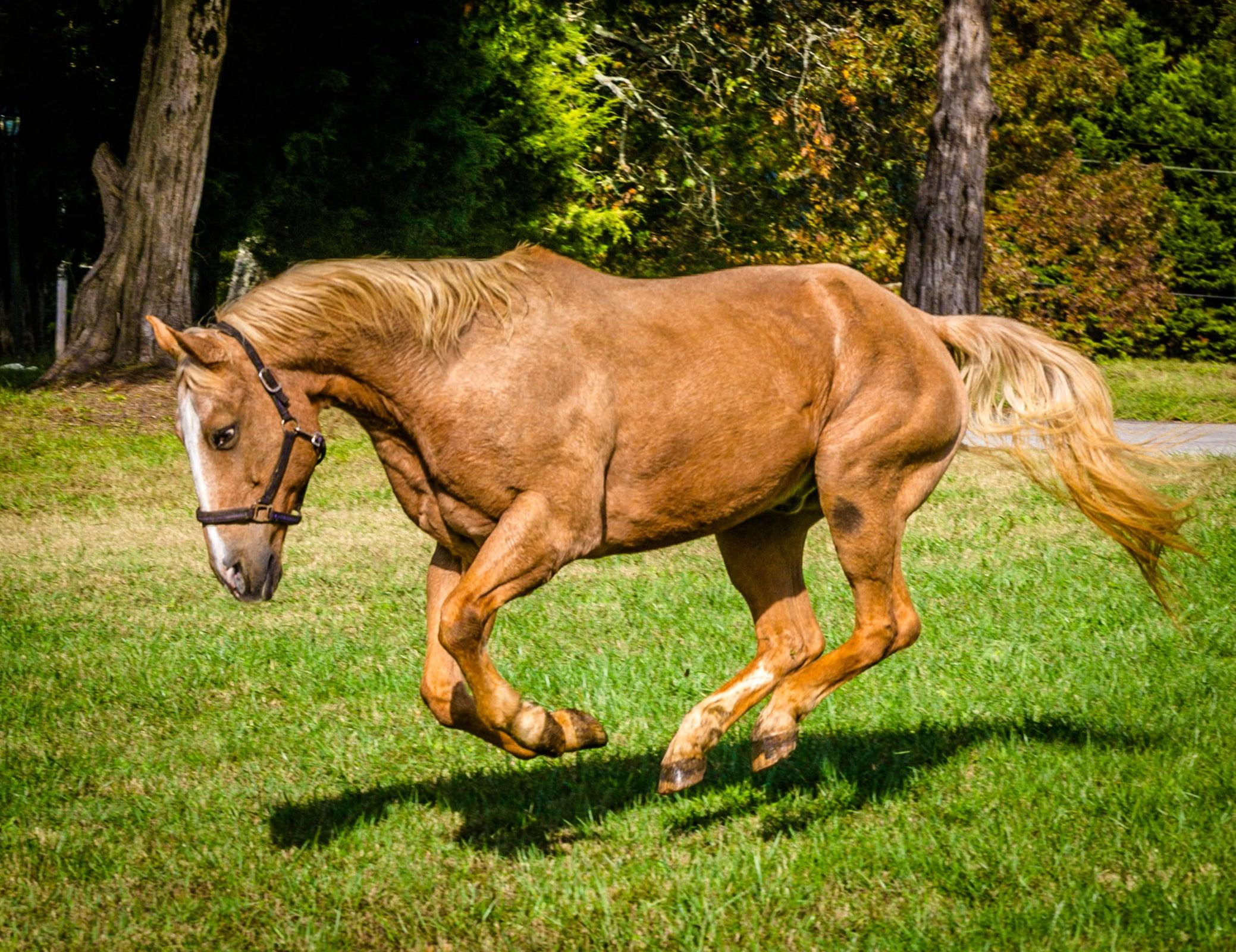 HELIUM horse-2