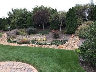 Summer view of backyard