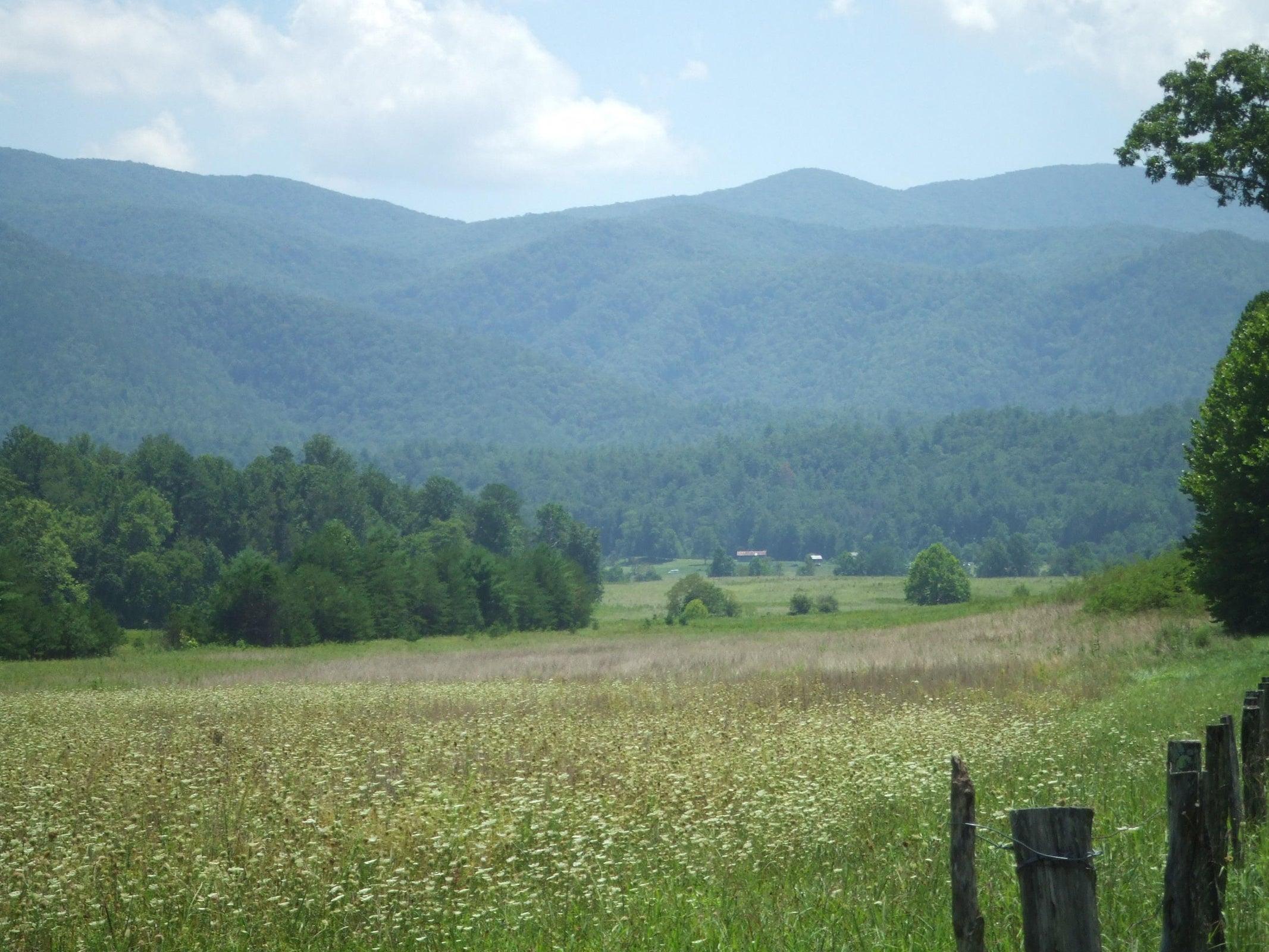 Hike the Nearby Smoky Mountains!
