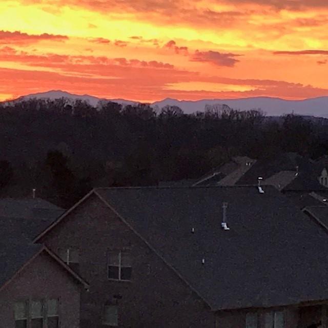 Dunlin - Mountain View