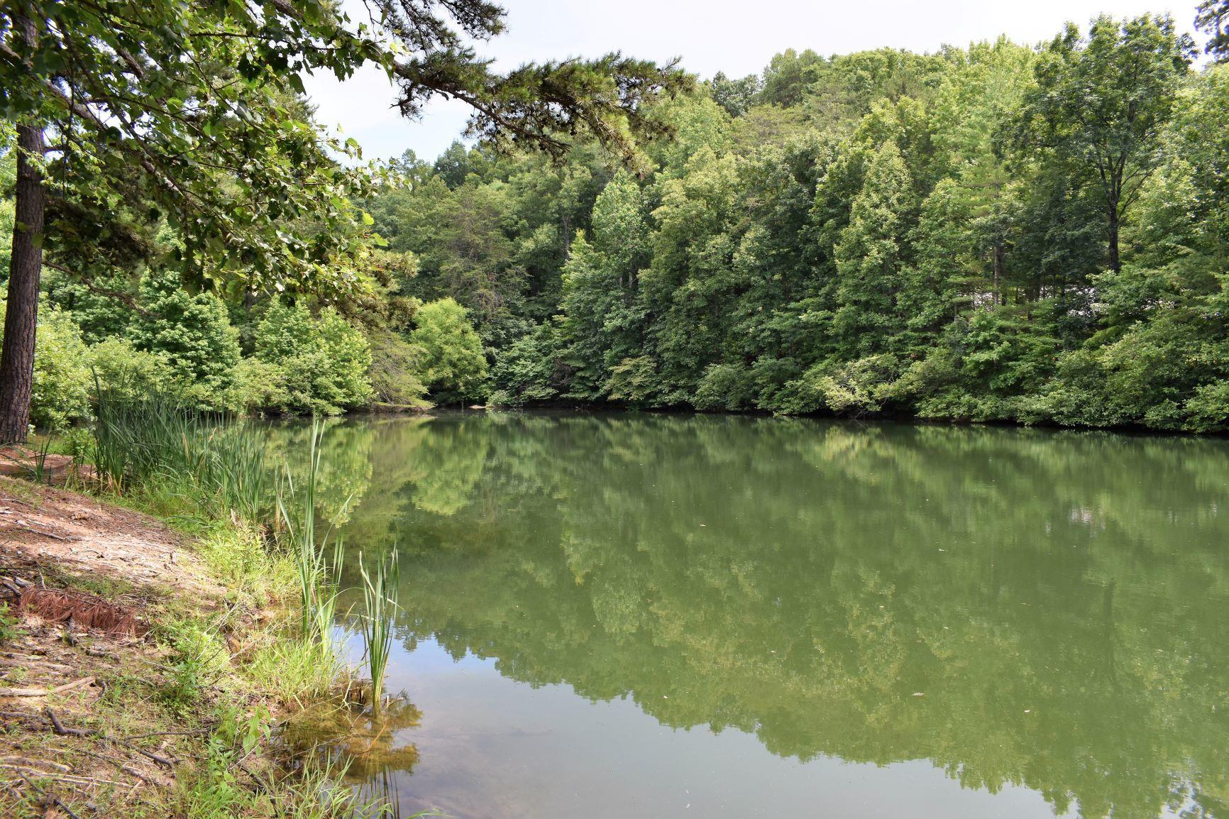 Nice spring-fed pond