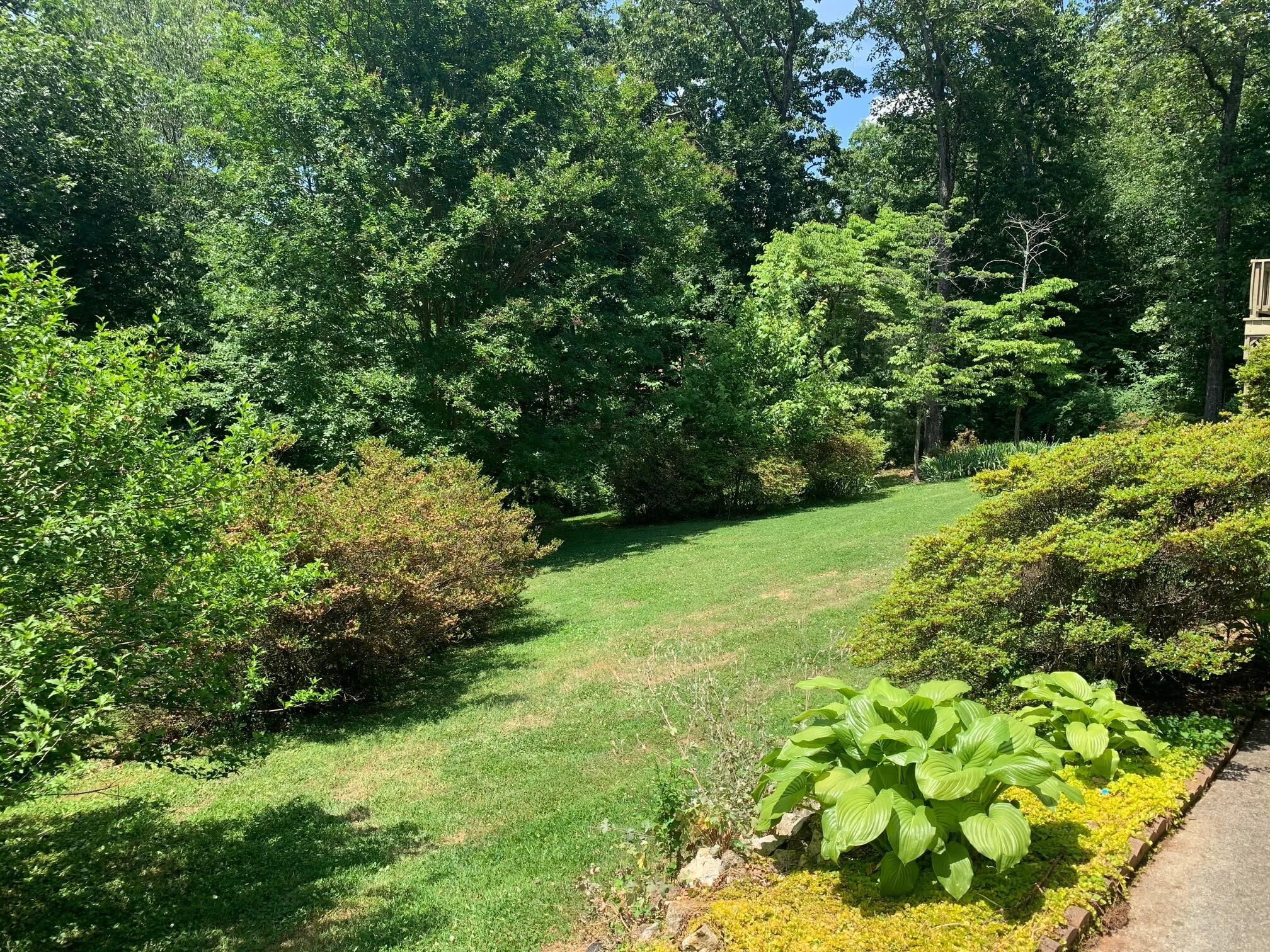 Gorgeous mature yard