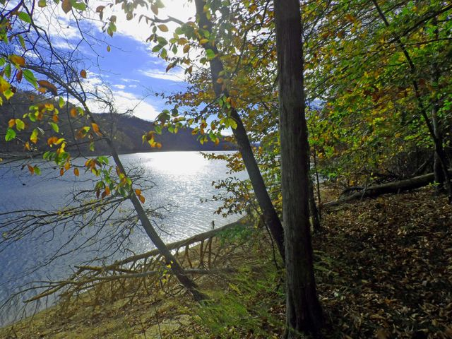 Lot 348 - Lick Branch Rd, New Tazewell, TN 37825