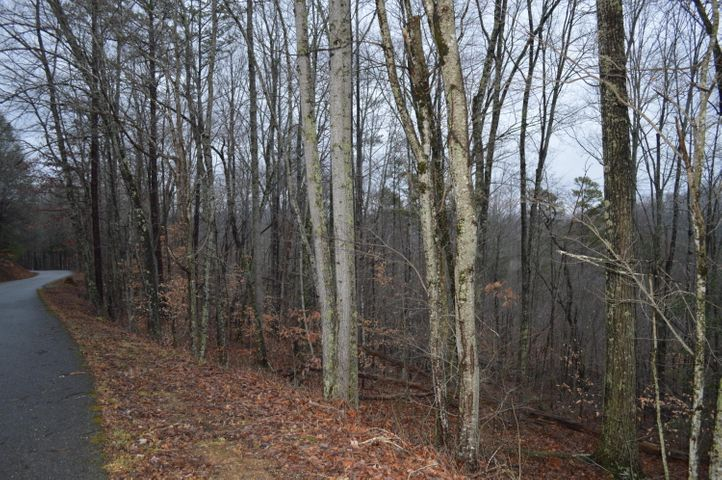 Lot 24 Cove Norris Rd, Caryville, TN 37714