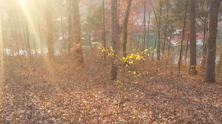 Wooded Lakefront Lot