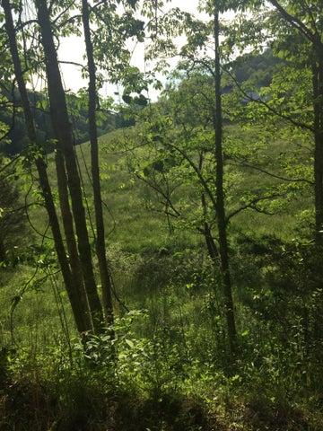 Fawn Trail Drive, New Tazewell, TN 37825