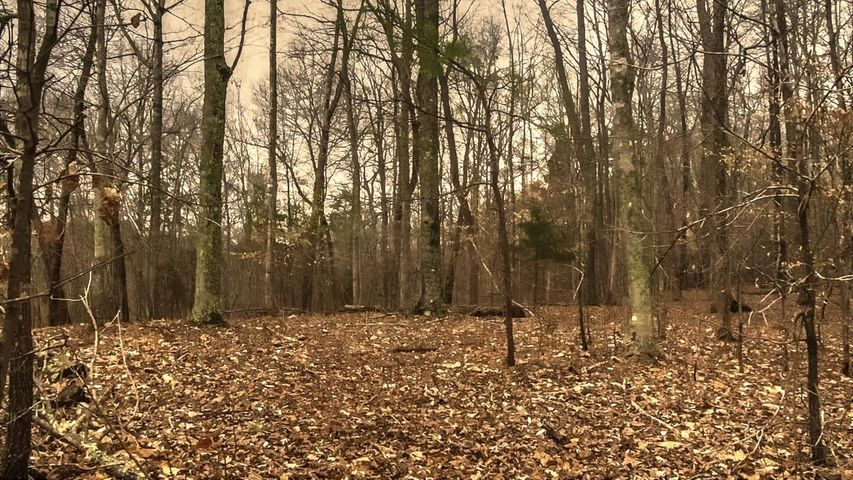 Lot 58 Stoney Rock Lane, Jacksboro, TN 37757
