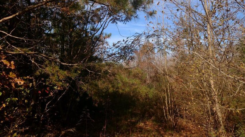 Lot 1 Beech Springs Rd., Ocoee, TN 37361