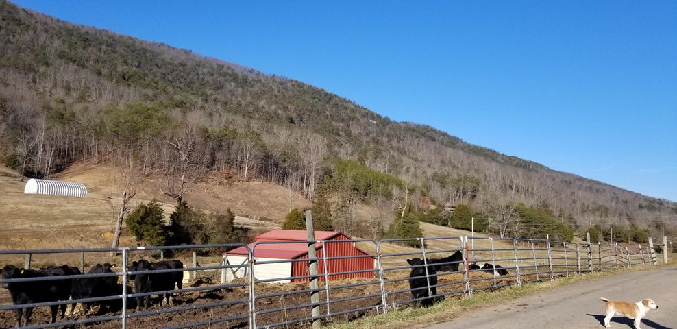 1431 Avondale Springs, Rutledge, TN 37861