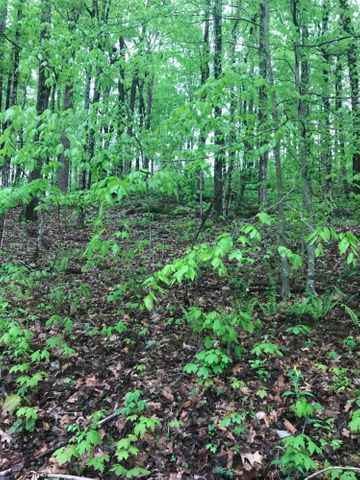 Dogwood Trail, Maynardville, TN 37807