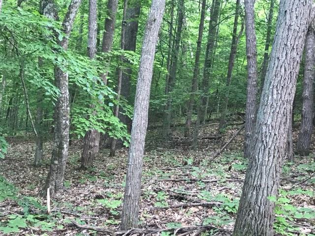 Tumbling Run Estates, Maynardville, TN 37807