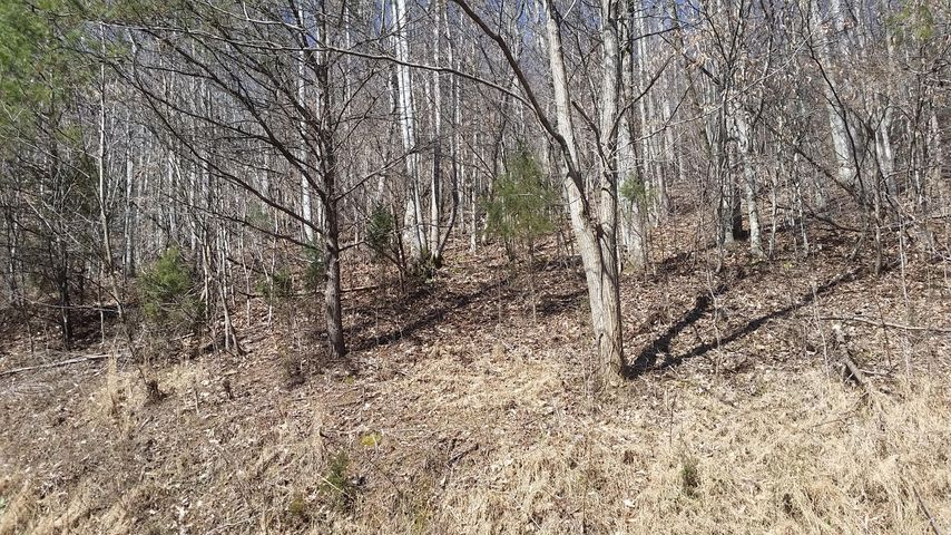 Lot 124 Chimney Rock Rd, New Tazewell, TN 37825