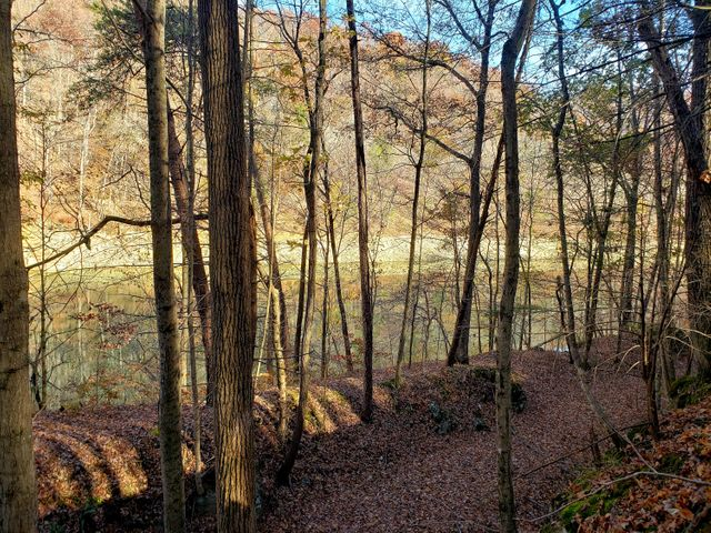 Lot 17 Lakemont Lane, Caryville, TN 37714