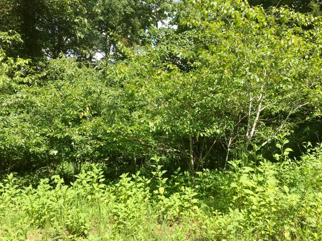 Lot 11 Deer Pond Circle, LaFollette, TN 37766