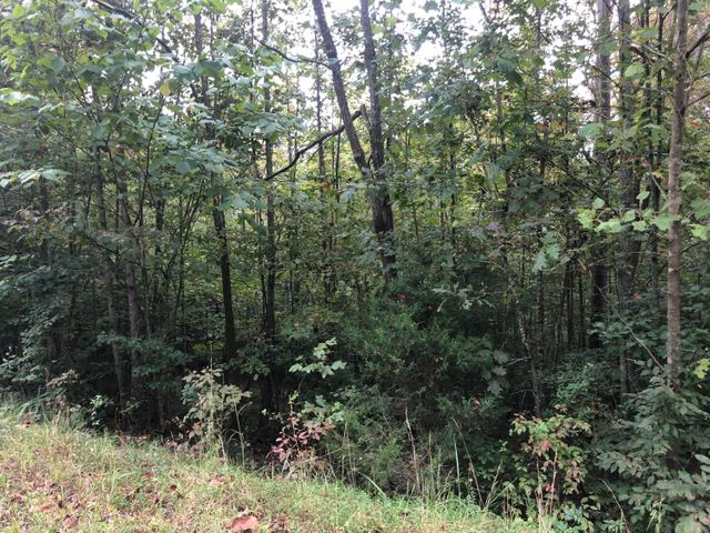 Windsor Lane, Jacksboro, TN 37757
