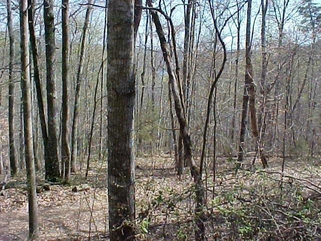 Lot 45 Walleye Point, Sharps Chapel, TN 37866