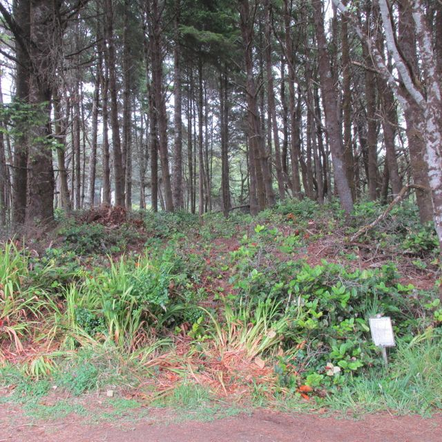 1914 NW Spencer St, Yachats, OR 97498 - Ocean view lot