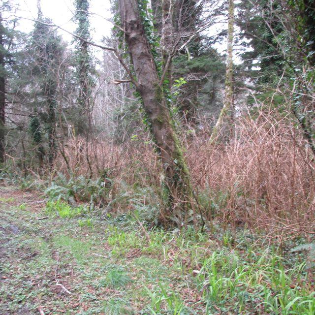 TL2600 NE Vine Maple Loop, Yachats, OR 97498 - .47 ACRE PARCEL
