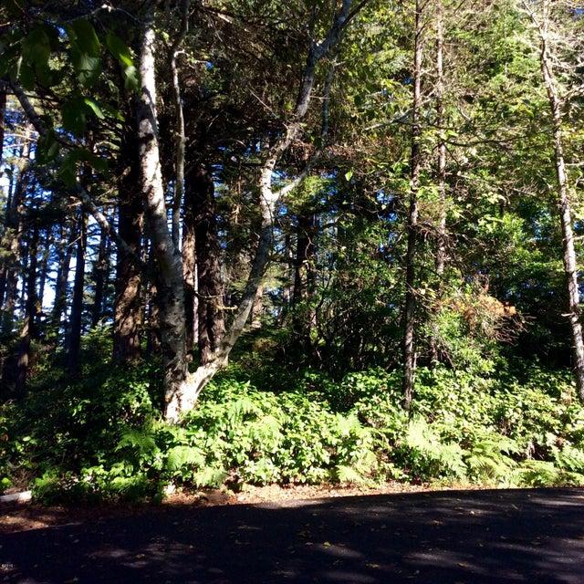 LOT 17 SW Walking Wood, Depoe Bay, OR 97341 - Little Whale Cove Lot