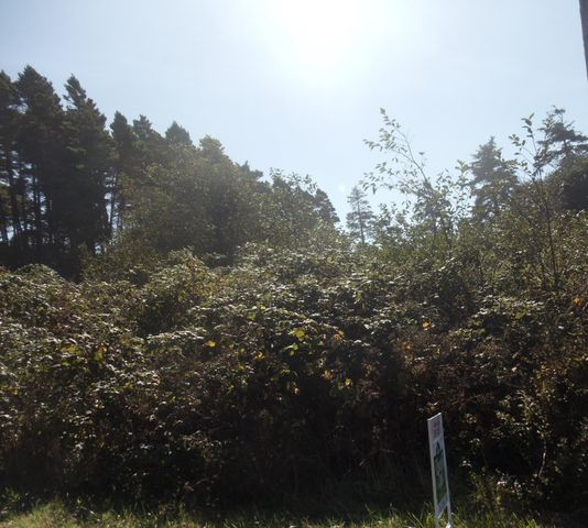 1035 NW Art St, Seal Rock, OR 97376