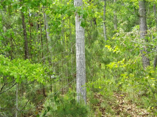 DEAD TIMBERS Rd, Dadeville, AL 36853