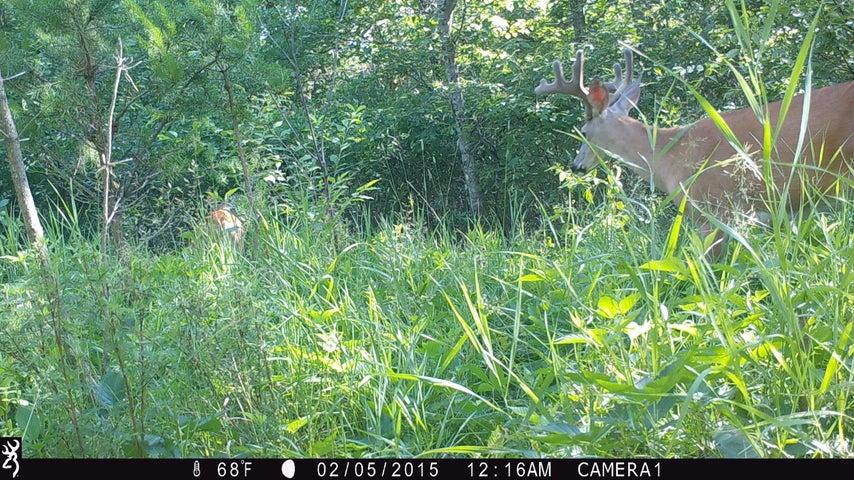 22.1 Acres US Hwy 141, Beaver, WI 54114
