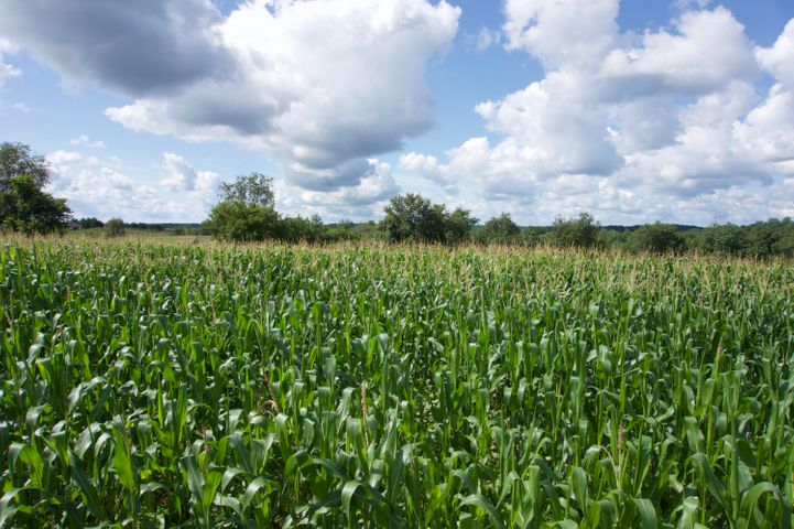 Wide open views of fields and skyline is what you'll get if you spend your time on this parcel!  Almost 7 acres to build your dream home or a weekend get away retreat!!    Mostly open land surrounded by trees and fields and lots of wildlife!