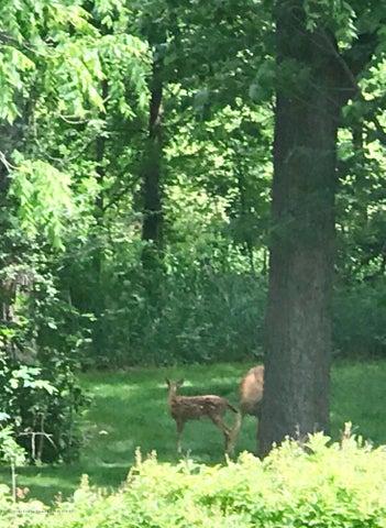 721 Fieldview Dr - Deer - 34