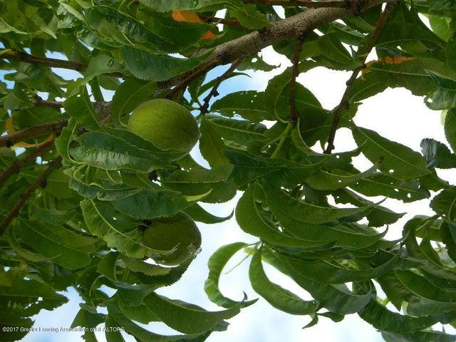 8800 W Parker Rd - necatarine tree - 36