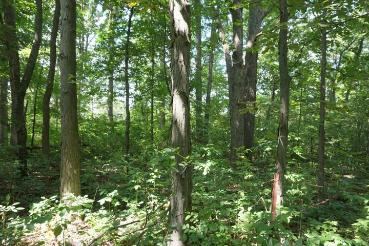 6234 W Grand River Rd - G.River.Mature.Trees - 31