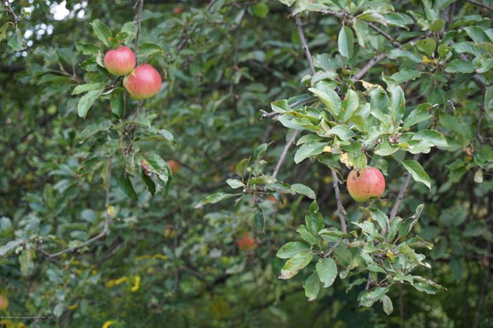 6234 W Grand River Rd - G.River.Fruit Trees - 34
