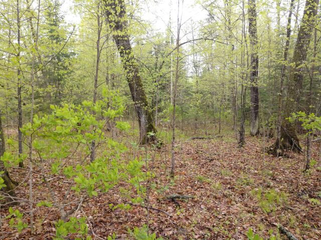 TBD Loon Bay Trail, Bemidji, MN 56601