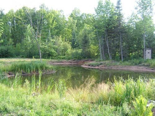 pond w/tree stand in back