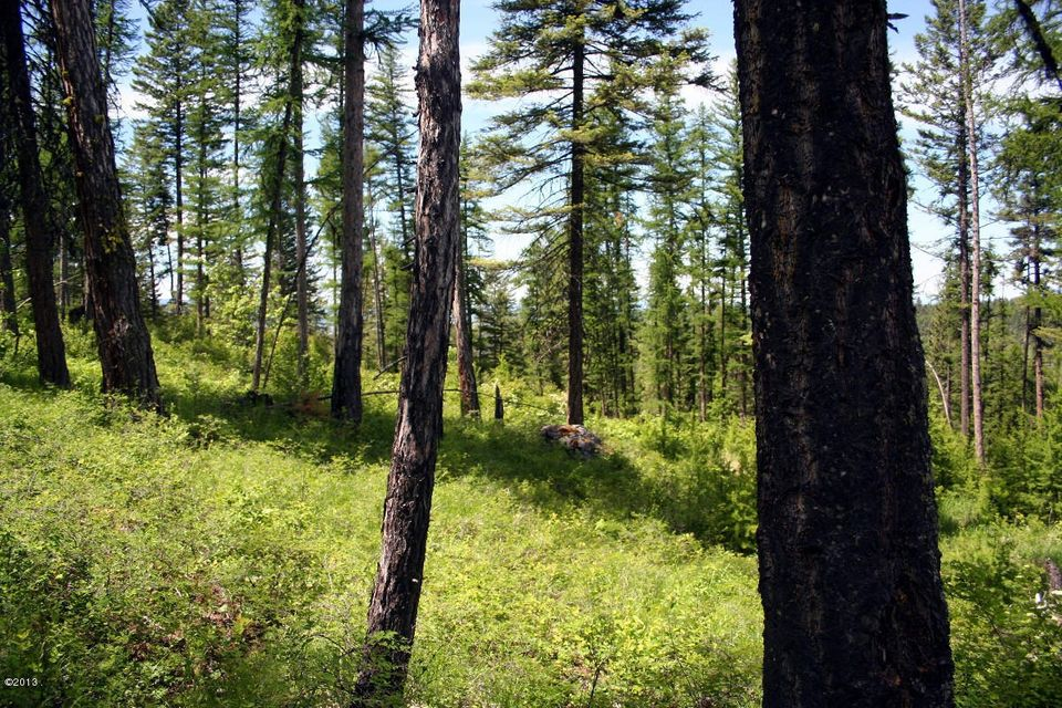 205 Timberjack Trail, Bigfork, MT 59911