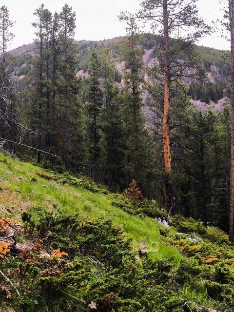 Tbd White Bull Road, Neihart, MT 59465