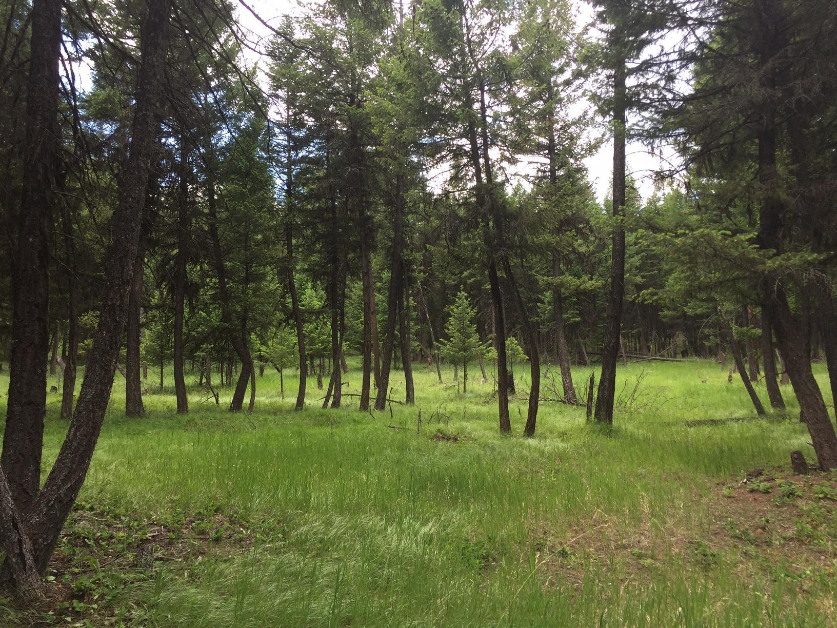 Nhn Graves Creek Road, Eureka, MT 59917