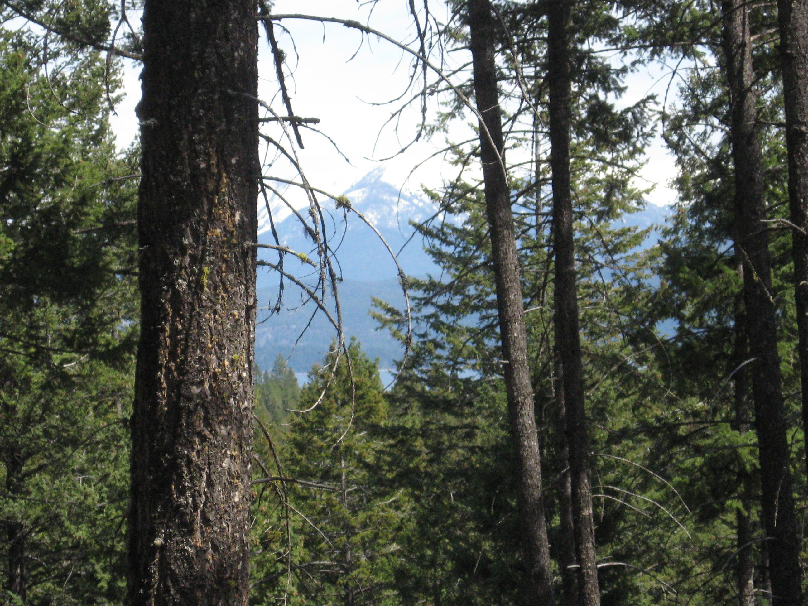 Nhn Hidden Fawn Trail, Lakeside, MT 59922