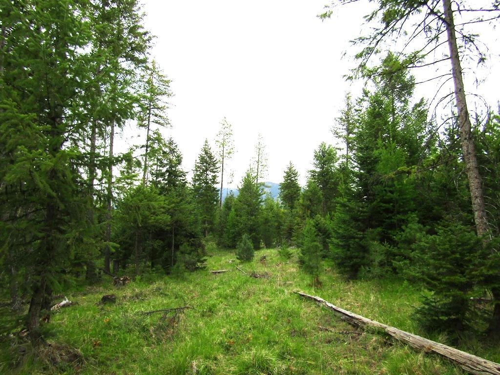 Lot 4 Shelterwood Trail, Troy, MT 59935