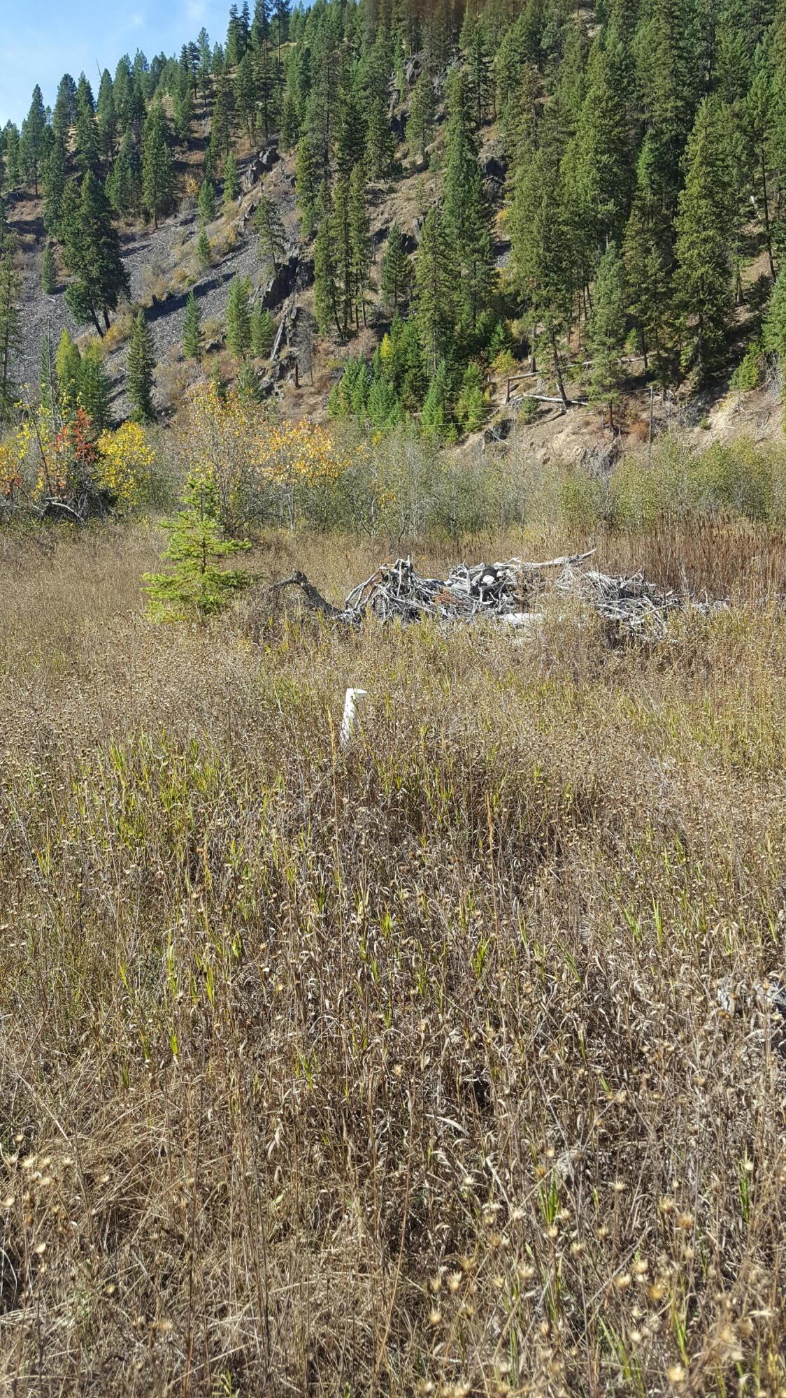Nhn Prospect Creek Road, Thompson Falls, MT 59873