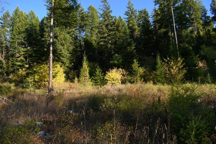 1050 Alpenglow Drive, 40 Acres, Lakeside, MT 59922