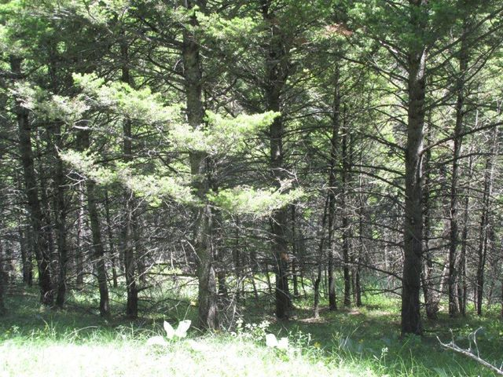 86 Wildlife Way, Jefferson City, MT 59638
