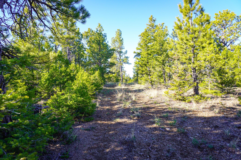 Nhn Jasper Road, Helena, MT 59602