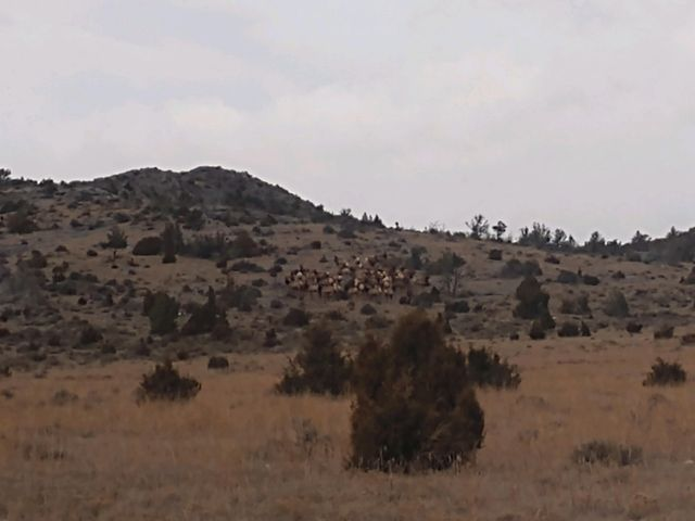 Tbd Elkhorn Game Ranch, Boulder, MT 59632