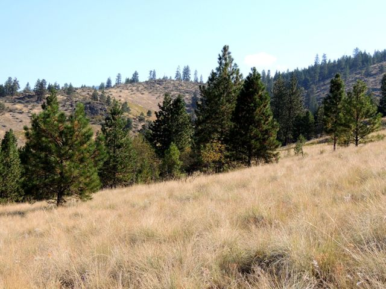 Nhn Deemer Peak Drive, Plains, MT 59859