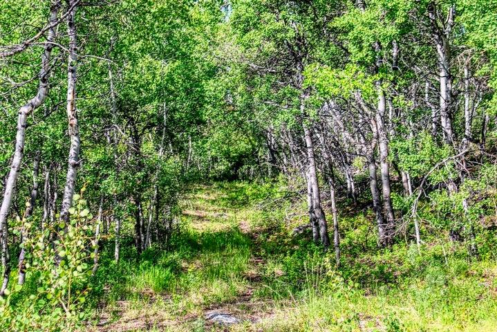 1063 Clear Creek Trail, Anaconda, MT 59711