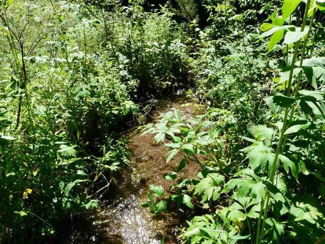 Tbd N N Lyons Creek Rd Road, Wolf Creek, MT 59648
